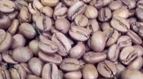 雲南のコーヒープレゼント!
