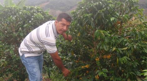 コロンビア「エスメラルダ農園ミゲルボニータ」