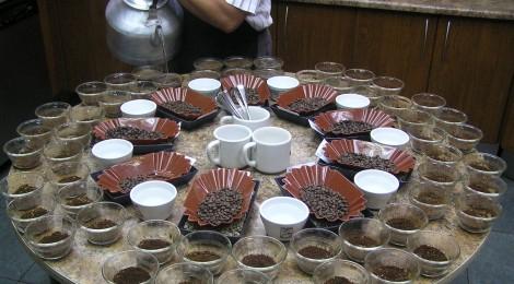 2019,9,23コーヒー豆、週間人気ランキング!